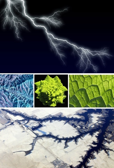 17 Captivating Fractals Found in Nature