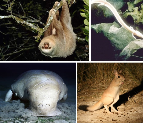 20 of the World's Weirdest Endangered Animal Species