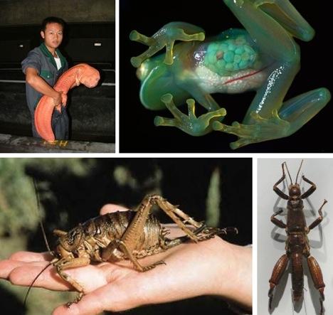 20 (More) Strange and Exotic Endangered Species