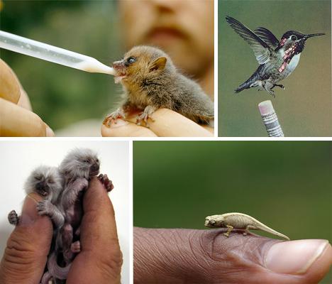 tiny-animals-main