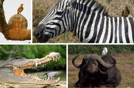 7 Symbiotic Wonders of the Aerial World