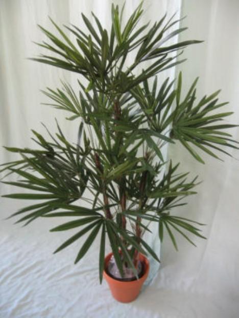 lady_palm_tree-468-x-6242