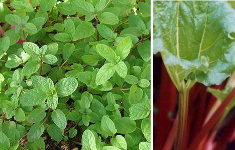 Grow Easy: 15 Foolproof Plants for Organic Gardens - WebEcoist | 468 x 300 jpeg 37kB