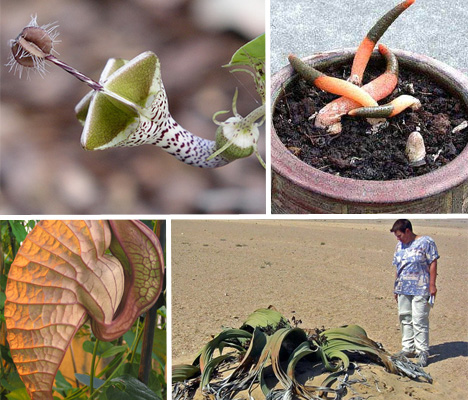 15 Rare, Exotic & Amazing Plant Species