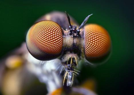 scary_bugs_2a.jpg