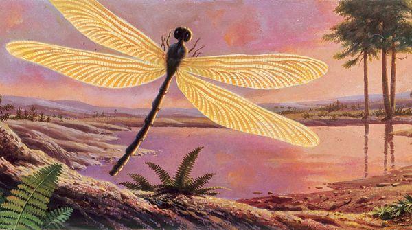 Giant Dragonflies Carboniferous