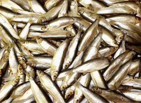 weird-diseases-fish-odor-syndrome
