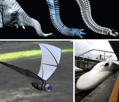 Brilliant Bio-Design: 14 Animal-Inspired Inventions