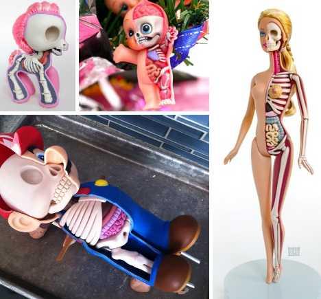 Doll anatomy - WebEcoist