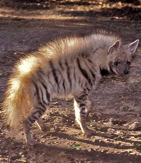 You Re Amazing Animals: Can't Spot This: 7 Unexpected Amazing Striped Animals