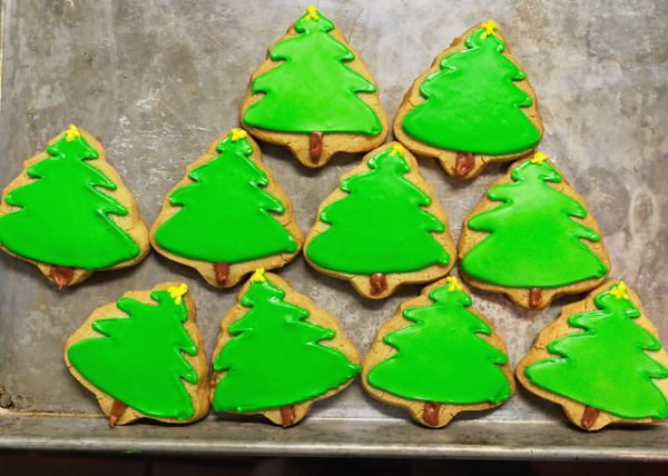 Pine Dining: 7 Amazing Edible Evergreen Foods and Drinks