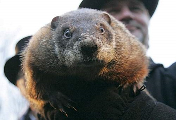 Meteorological Marmots: 7 Predictable Groundhogs
