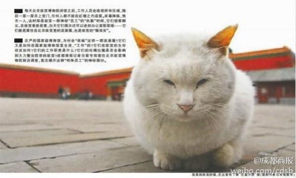 Chairmen Meow: Stray Cats Of Beijing's Forbidden City