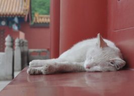 Chairmen Meow: Stray Cats Of Beijing's Forbidden City