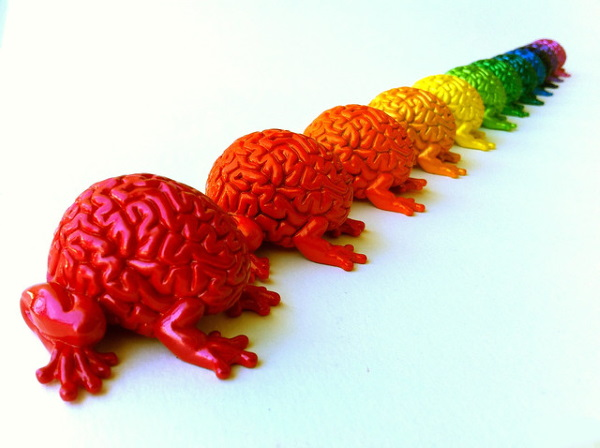 Jumping Brains: The Smartest Frogs In The Room