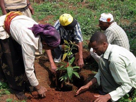 Grand Spris: Ethiopia's Mango Avocado Smoothie