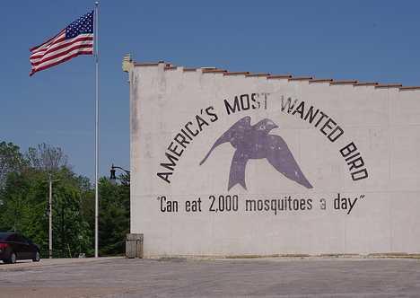 Bite The Biters: 7 Amazing Mosquito-Eating Creatures