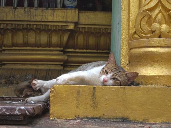 Neko Nirvana: Cat-Napping In The Lap Of Buddha