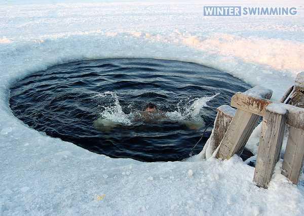 Cold Comfort: Polar Bear Swims Do A Body Good