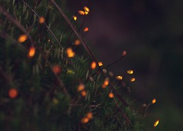 Glowing Frogs and Fiery Moss: Amazing Bioluminescent Forest