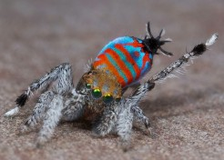Meet Sparklemuffin and Skeletorus, Two New Spider Species
