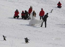 So Weddings In Antarctica Are A Thing Now