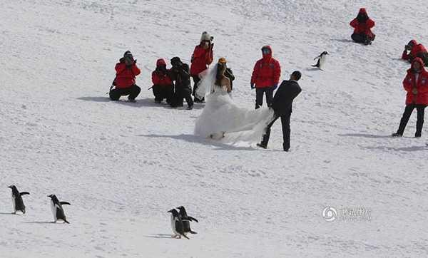 penguins-tourists2