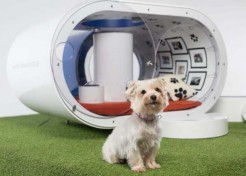Pet Tech Palace: The Samsung Dream Doghouse