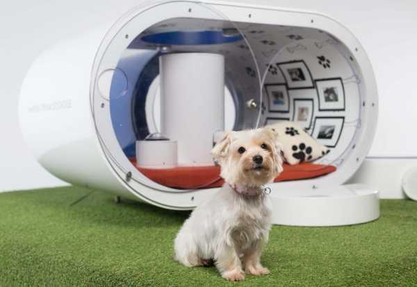 Samsung Dream Doghouse 1