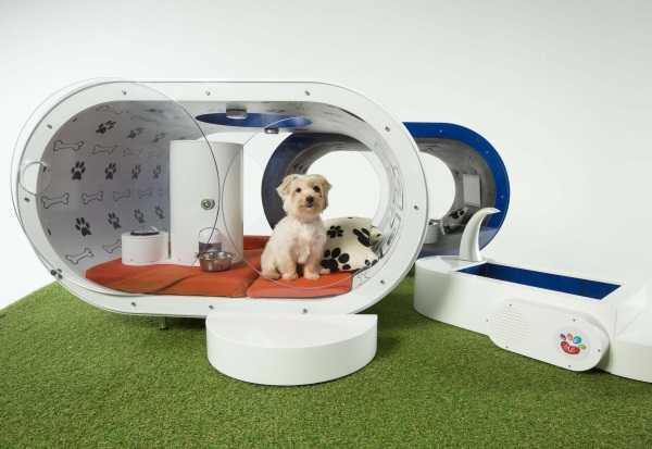Samsung Dream Doghouse 10
