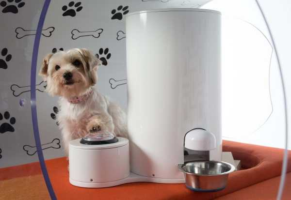 Samsung Dream Doghouse 5