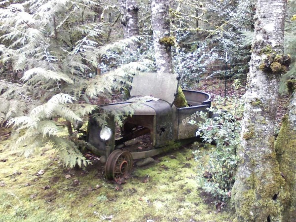 abandoned car tree 0wide