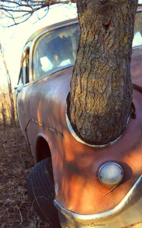 abandoned car tree 1