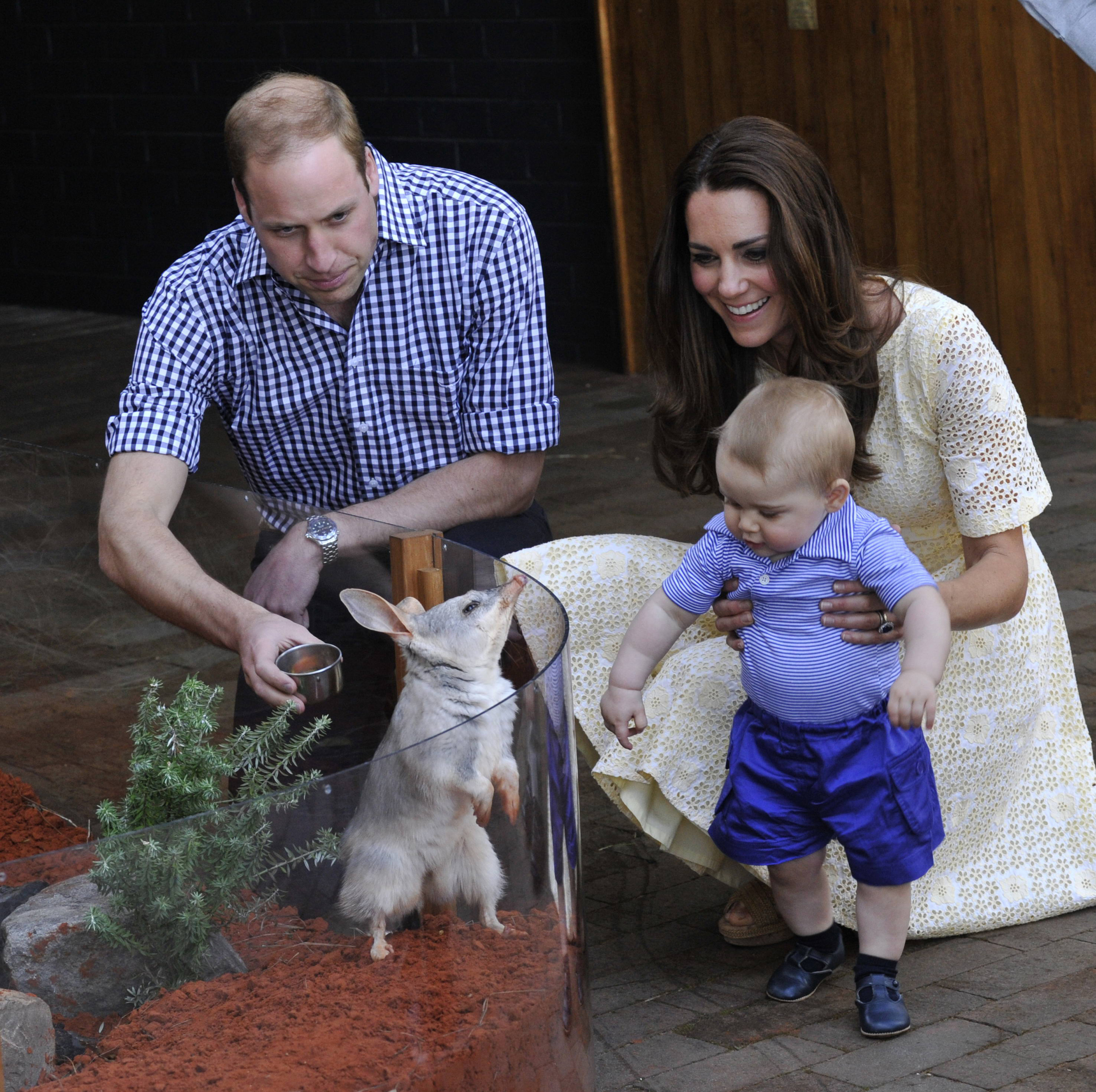 Zoo Royally Delighted by Bilbies Birth