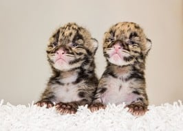 Daily Dose of Cute: 10 Most Squeal-Worthy Baby Animals
