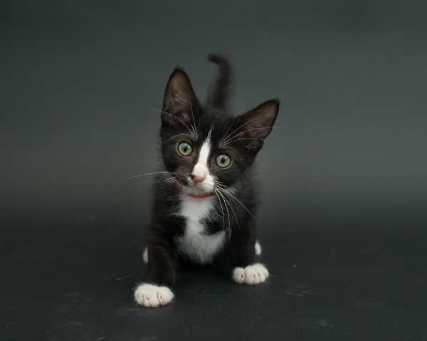 black-cat-project-7c