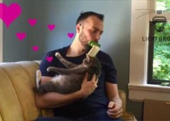 Feline Lickin' Good: Groom Your Cat With A LICKI Brush