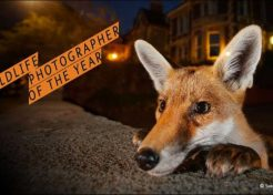 2016 Wildlife Photographer of the Year Winners