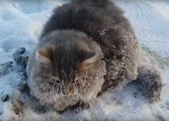 Freeze Parking: Russian Cat Escapes Winter's Grip