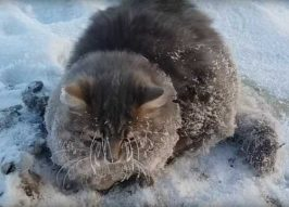 Freeze Parking: Russian Cat Escapes Winter's Grip