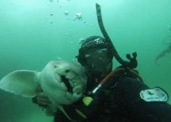 Love Bites: Shark & Diver Enjoy 7-Year Friendship