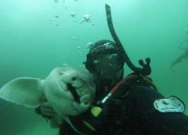 Love Bites: Shark & Diver Enjoy 7-Year Friendship