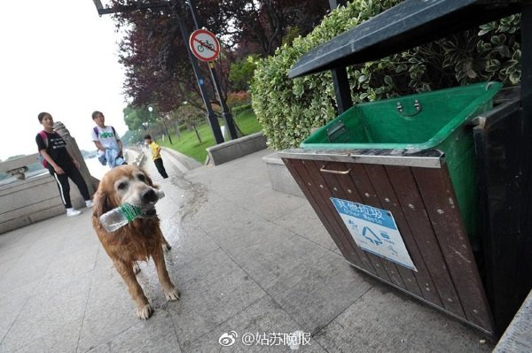 china-golden-retriever-cleans-river-1