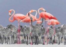 Beak Shots: 2017's Bird Photographers of the Year