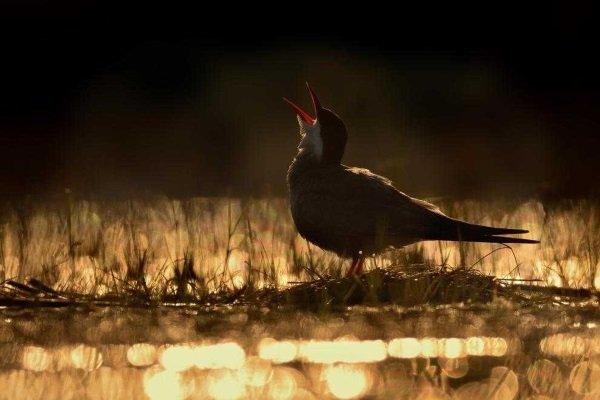 2017-wildlife-birds-2