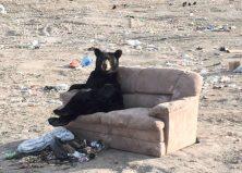Couch Pooh-Tato: Bear Sez 'Sofa, So Good'