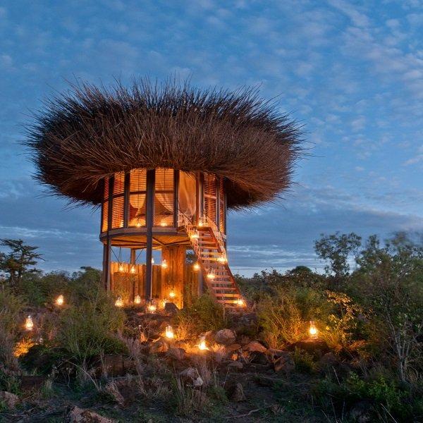 Best Nestin': Luxurious Treetop Bird Nest Suite