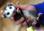 Lash Resort: Wildlife Refuge Recycles Mascara Wands