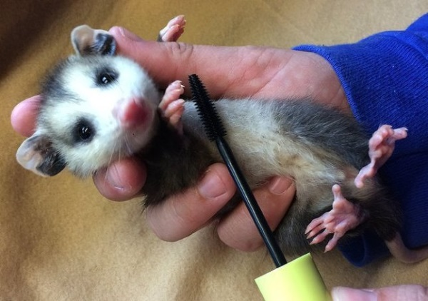Lash Resort: Wildlife Refuge Recycles Mascara Wands