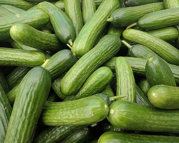 Cumber Some: 7 Curious & Cool Cucumber Cultivars